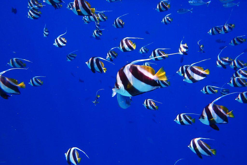 Schnorcheln auf Mallorca, Fische