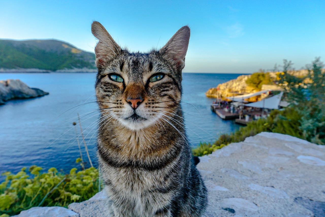 Katze Mallorca